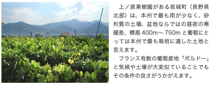 日本のボルドー坂城町