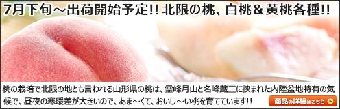 山形県産 白桃&黄桃