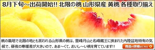 山形県産 もも 黄桃