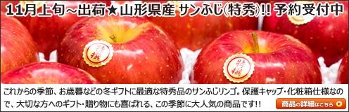 山形県産 りんご サンふじ