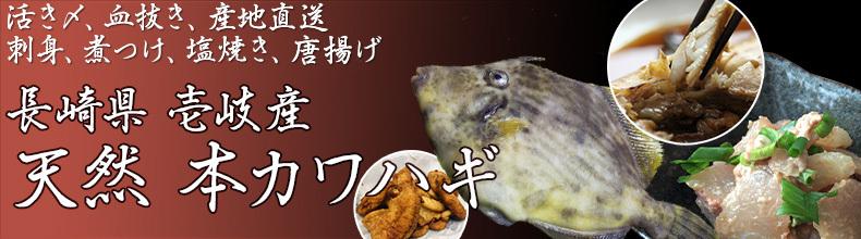 長崎県 壱岐島 天然本カワハギ
