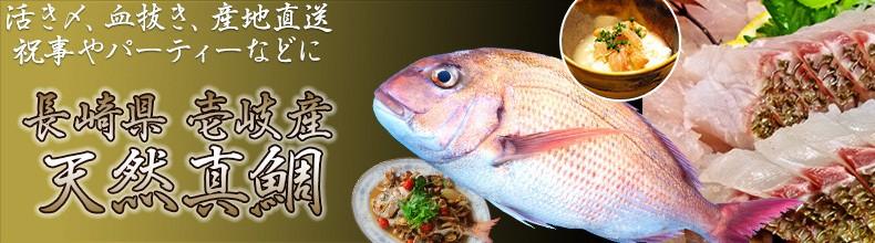 長崎県 壱岐島 天然真鯛