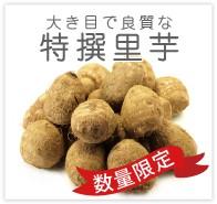 里芋 無農薬 野菜 自然食品 東京