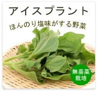 アイスプラント 無農薬 野菜 自然食品 東京