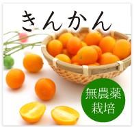 きんかん 無農薬 野菜 自然食品 東京