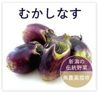 むかしなす 無農薬 野菜 自然食品 東京