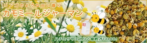 ジャーマンカモミールは、緑の薬箱といわれる幸せハーブ|美と健康のヴィーナース