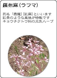 ヴィーナース|羅布麻茶