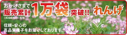 れんげ種子