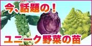 話題のユニーク野菜の苗!