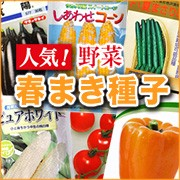 人気!野菜の春まき種子!!