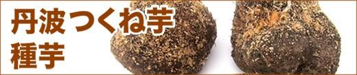 丹波つくね芋の種芋!!