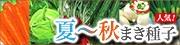 夏〜秋まき種子!