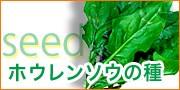 ホウレンソウ種子!