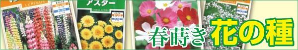 春蒔き花の種子
