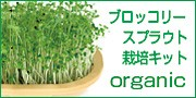 ブロッコリースプラウト栽培セット!