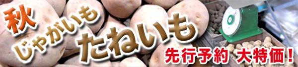 秋ジャガイモ大特価!