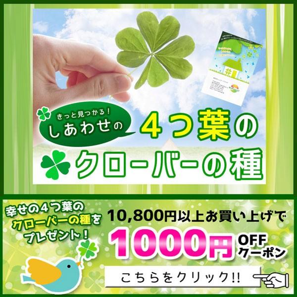 10800円以上お買い上げで1000円OFFクーポン