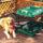 犬用サークル・ゲージ