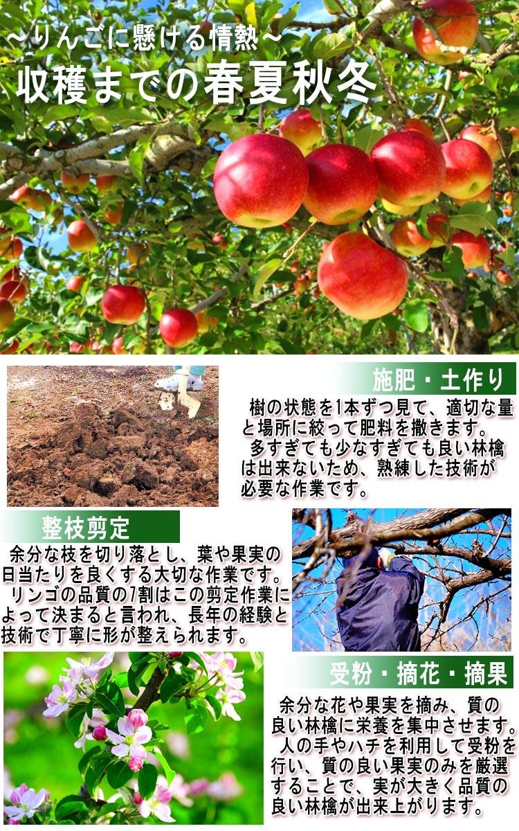 りんご 通販