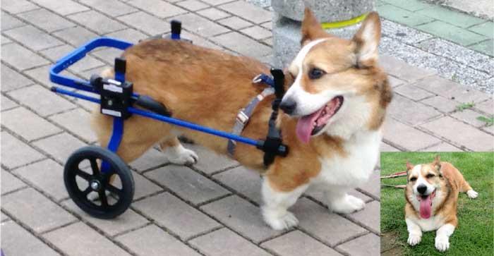ラッキーの車椅子