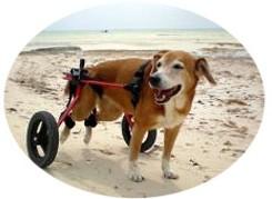 犬用車椅子 ML