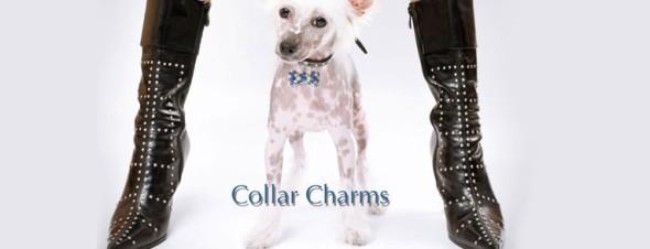 犬 チャーム