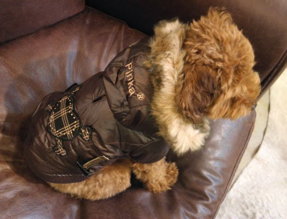 ミ犬のコート
