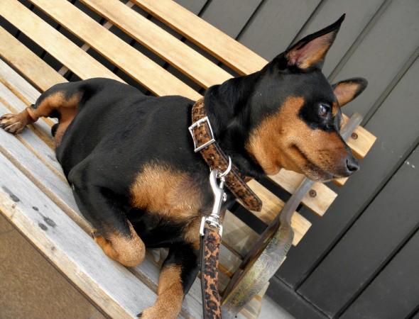 犬の首輪モデルれんくん