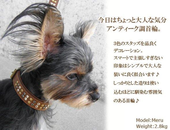 犬の首輪モデルメルちゃん