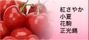紅さやか 小夏 花駒 香夏錦 正光錦