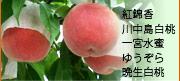 紅錦香 川中島白桃 一宮水蜜 ゆうぞら 晩生白桃