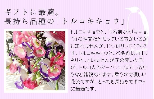 暑い夏の花贈りに。長持ち品種の「トルコキキョウ」をお届け!トルコキキョウという名前から「キキョウ」の仲間だと思っている方がいるかも知れませんが、じつはリンドウ科です。トルコ〜という名前は、はっきりとしていませんが花の開いた形が、トルコ人のターバンに似ているからなど諸説あります。柔らかで優しい花姿ですが、とっても長持ちで暑い夏のギフトに最適です。