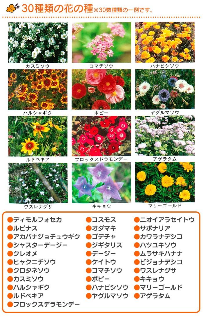 花の種ブレンドパック フラワリーランド 28192 【1パック】