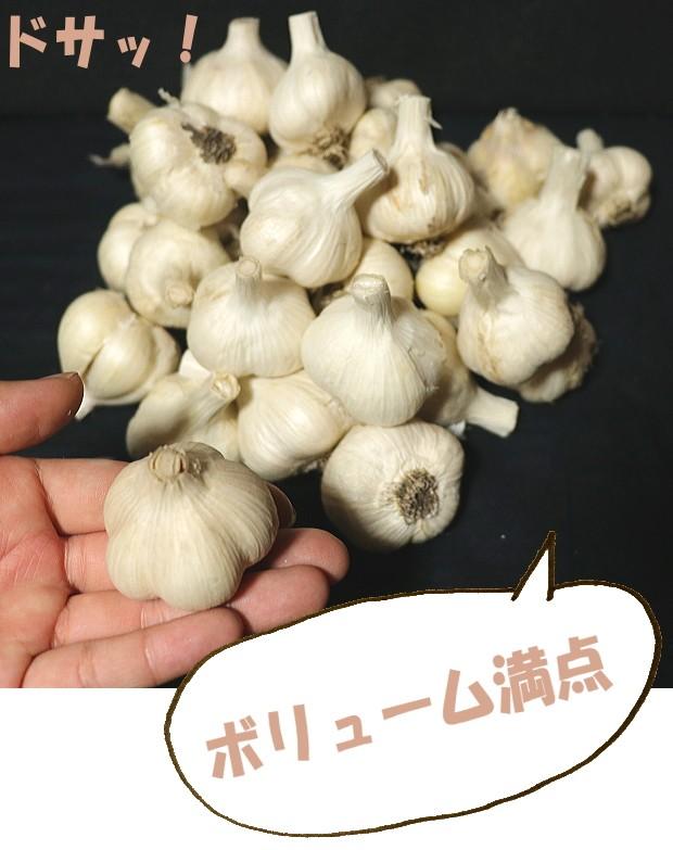 青森県産にんにくSサイズ