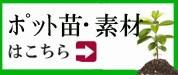 素材・苗コーナー