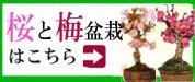桜・梅特集