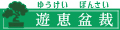 遊恵盆栽 Yahoo!店 ロゴ