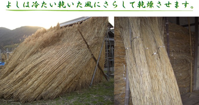 よしは冷たい乾いた風にさらして乾燥させます。