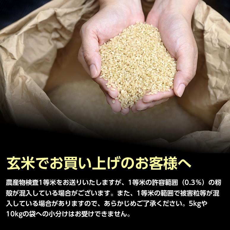 人気の玄米