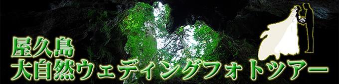 屋久島大自然ウェディングフォトツアー