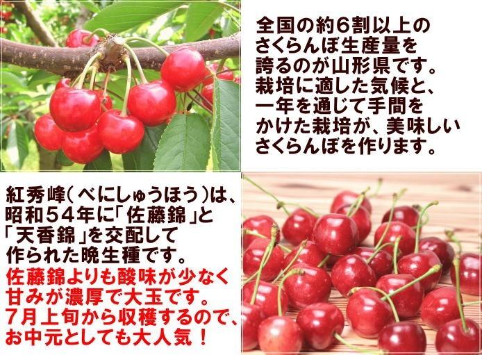 全国の約6割以上のさくらんぼ生産量を誇るのが山形県です。栽培に適した気候と、一年を通じて手間をかけた栽培が、美味しいさくらんぼを作ります。紅秀峰(べにしゅうほう)は、昭和54年に「佐藤錦」と「天香錦」を交配して作られた晩生種です。佐藤錦よりも酸味が少なく甘みが濃厚で大玉です。7月上旬から収穫するので、お中元としても大人気!