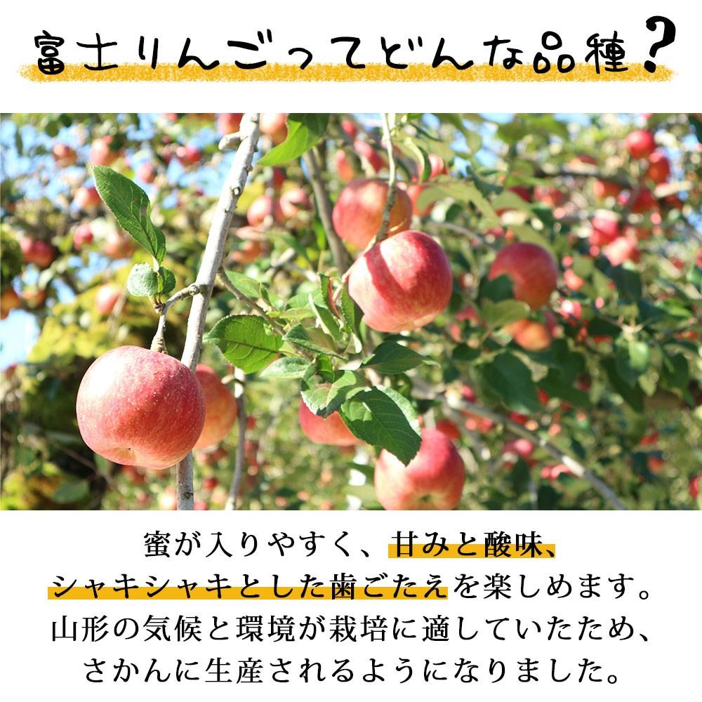 富士りんごってどんな品種?