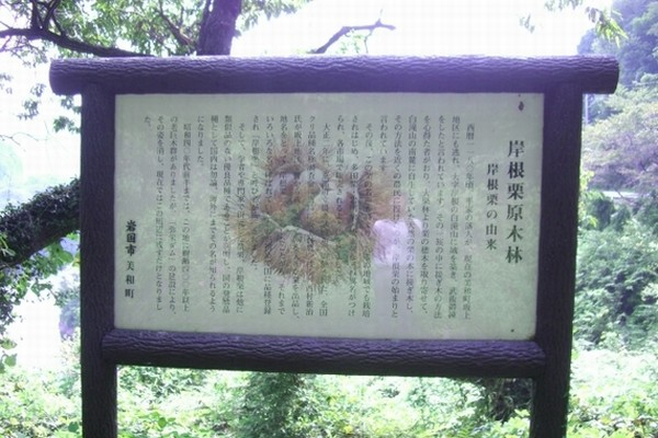 岸根栗の原木