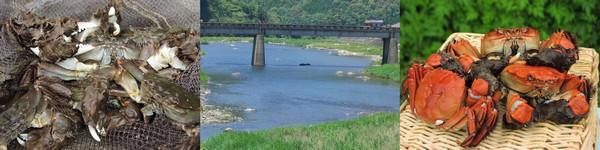 天然川ガニ