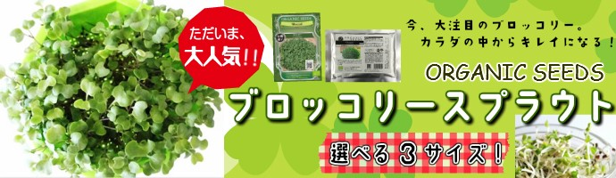 スプラウト(スプラウター)ブロッコリー種つき