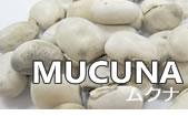 MUCUNA ムクナ