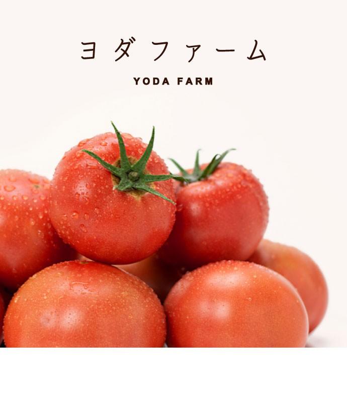 トマト ヨダファーム