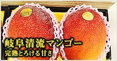 岐阜清流マンゴー 完熟とろける甘さ