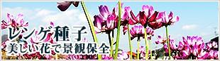 レンゲ種子 美しい花で景観保全